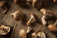 Setas orgánicas crudas de Shitaki Fotos de archivo libres de regalías