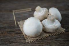 Setas orgánicas frescas del champiñón en el fondo de madera Fotografía de archivo libre de regalías