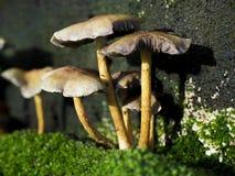 Setas que crecen en árbol fotografía de archivo