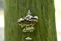 Setas que crecen en el lado del árbol foto de archivo libre de regalías