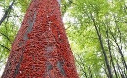 Setas rojas en la corteza de un árbol en el bosque Imagenes de archivo