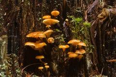 Setas salvajes Foto de archivo libre de regalías