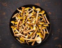Setas salvajes comestibles amarillas crudas de las setas en una tabla de madera grande de Pan On An Old Black que fríe Imágenes de archivo libres de regalías