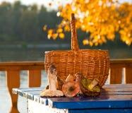 Setas y cesta de mimbre Fotografía de archivo libre de regalías