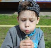 Sete anos de menino idoso com dente-de-leão Imagens de Stock