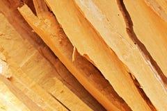 Sete cem Willow Wood Fotos de Stock