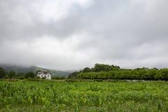 Sete Cidades Farmland. Farmland near Sete Cidades in Sao Miguel, Portugal royalty free stock photo
