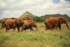Sete elefantes Imagens de Stock