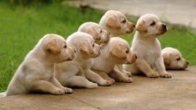 Sete maravilhas Foto de Stock
