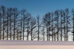 Sete monte suave no inverno, Biei, Hokkaido, Japão imagem de stock royalty free