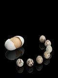 Sete ovos de codorniz e um ovo de madeira Foto de Stock Royalty Free