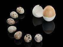 Sete ovos de codorniz e um ovo de madeira Imagem de Stock Royalty Free