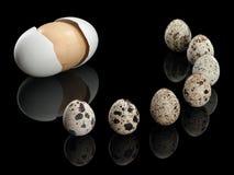 Sete ovos de codorniz e um ovo de madeira Imagem de Stock