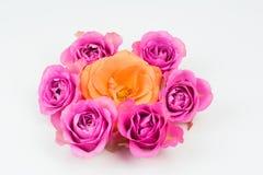 Sete rosas Foto de Stock Royalty Free