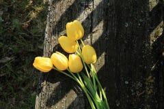 Sete tulipas amarelas Ramalhete das tulipas Imagens de Stock