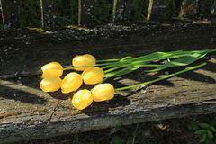 Sete tulipas amarelas Ramalhete das tulipas Imagem de Stock