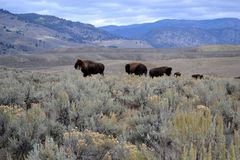 setembro em Wyoming Foto de Stock Royalty Free