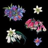 Seth, kolekcja kwiatostany Clivia royalty ilustracja