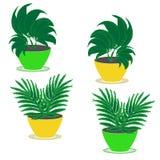 Seth quatre plantes ornementales de jardin d'intérieur avec le feuillage luxuriant dans des pots de fleur de vert et de jaune sur photos libres de droits