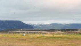 Setki frajery latają nad doliną w Iceland lodowiec w tle zbiory wideo