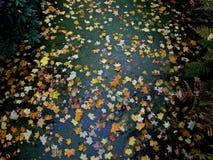 Setki liście na wodzie zdjęcie stock