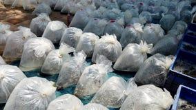 Setki torby żywa ryba dla sprzedaży przy rynkiem zdjęcie wideo