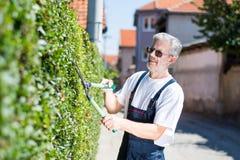 Seto del ajuste del jardinero con las tijeras que cultivan un huerto Fotos de archivo