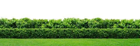 Seto verde Imagen de archivo libre de regalías