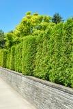Seto verde alto en terraza concreta con el fondo del cielo azul Imagen de archivo libre de regalías