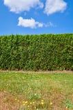Seto verde con el césped en frente en fondo del cielo azul Imagen de archivo libre de regalías