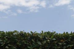 Seto y cielo verdes imágenes de archivo libres de regalías