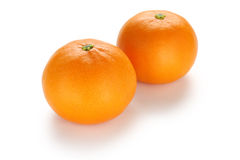 Setoka orange , japanese high quality citrus fruit Royalty Free Stock Photos