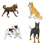 Sets of illustration dogs (vector) Stock Photo