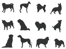 Sets of silhouette dogs, create by vector Royalty Free Stock Images
