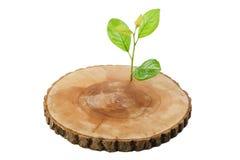 sett trä Royaltyfri Fotografi
