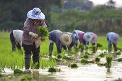 Sette agricoltori Immagini Stock