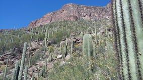Sette cadute, Santa Catalina Mountains, Arizona fotografia stock libera da diritti