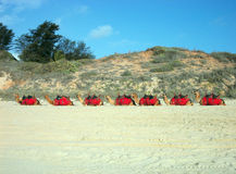 Sette cammelli Fotografia Stock