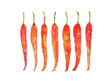 Sette peperoncini su bianco Fotografia Stock