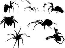 Sette siluette del ragno Fotografie Stock Libere da Diritti