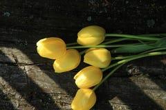 Sette tulipani gialli Mazzo dei tulipani Immagine Stock Libera da Diritti