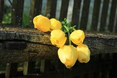 Sette tulipani gialli Mazzo dei tulipani Immagine Stock