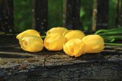Sette tulipani gialli Mazzo dei tulipani Fotografie Stock Libere da Diritti