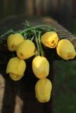 Sette tulipani gialli Mazzo dei tulipani Fotografia Stock