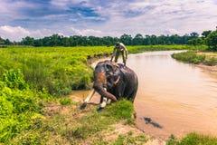 9 settembre 2014 - parco nazionale di Chitwan del bagno dell'elefante, Nepal Fotografie Stock