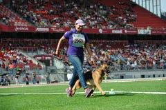 7 settembre 2014 più grande manifestazione di cane da pastore tedesca di Nurnberg in tedesco Fotografia Stock