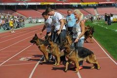 7 settembre 2014 più grande manifestazione di cane da pastore tedesca di Nurnberg in tedesco Fotografie Stock