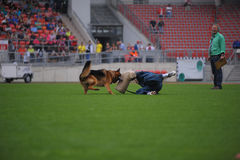 7 settembre 2014 prova di abilità di lavoro di Nurnberg su più grande tedesco lei Fotografie Stock