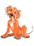 Setter puppy Stock Images