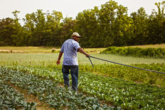 Setting irrigation down Royalty Free Stock Photo